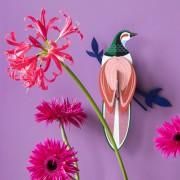 "STUDIO ROOF PARADISE BIRD ""FIJI"""